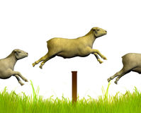Counting jumping sheep Royalty Free Stock Images