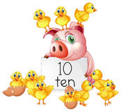 Counting number ten with pig and chicks Stock Images