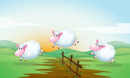 Counting sheeps. Illustration of three sheeps jumping over a fence Royalty Free Stock Images