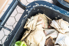 Countless crawling maggots in and around an organic waste bin. Countless crawling maggots in and around a brown organic waste bin Stock Image