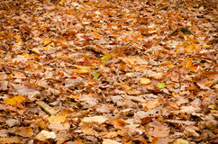 Countless leaves Royalty Free Stock Images