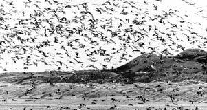 Countless Seagulls Stock Image