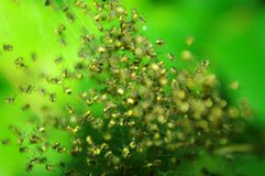 Countless tiny spiders Royalty Free Stock Photos