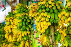 Countless yellow bananas, bunch of bananas on sale at a street stall. In Sri Lanka in Asia stock photo