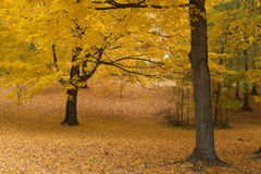 In The Country. Fall foliage in forest Stock Photos