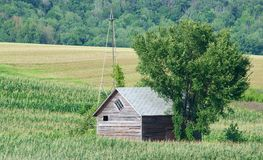 Country. Farm shed in the middle of a corn field Stock Image