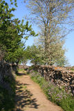 In the country. Path in Salamanca, Spain Stock Photography