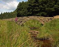 Country Arched Bridge Stock Image