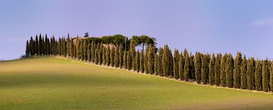 Country Aveneu (Tuscany) Stock Image
