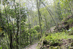 Country bamboo forest Stock Photo