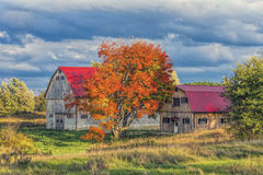 Country Barn in Autumn. Rustic barn in the country with full autumn colour Royalty Free Stock Photography
