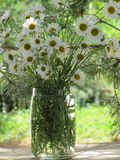 Country bouquet of white daisies Royalty Free Stock Image