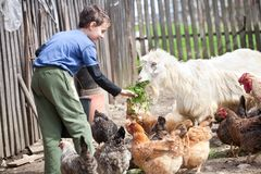 Country boy feeding the animals. Little farm boy feeding the chickens and the goat in the countryside Royalty Free Stock Photography
