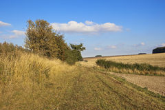 Country bridleway in autumn. A country scenic bridleway beside cultivated fields in autumn with hawthorn hedgerows and dry grass in the yorkshire wolds england Stock Photo