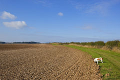 Country bridleway with pet dog Royalty Free Stock Images