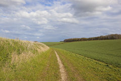 Country bridleway in the yorkshire wolds Royalty Free Stock Photo