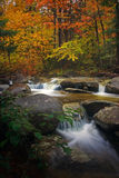Country brook in autumn Royalty Free Stock Photography