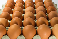Country brown eggs Stock Image