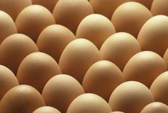 Country brown eggs lined up Royalty Free Stock Images
