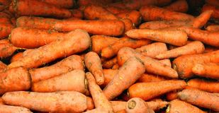 Country Carrots Stock Photography