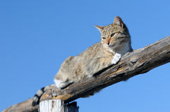 Country cat Stock Photo
