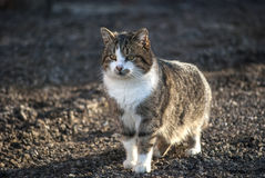 Country cat. Common country cat on earth ground as background stock images