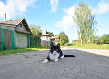 Country cat lying on the road. Stock Photo