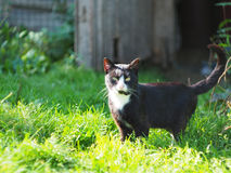 Country cat Royalty Free Stock Image
