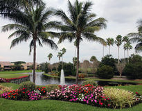Country Club Landscape. With palm trees flowers and a water Stock Photography