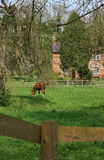 Country Cottage and Horse. A red bricked country cottage in rural Wiltshire, England viewed through trees and across a green grassed field with a brown coloured Royalty Free Stock Image