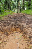 Country dirt path through the forest with mud and large puddles after rain Royalty Free Stock Images