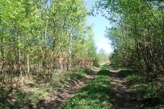Free Country Dirt Road Royalty Free Stock Photos - 116570578