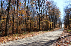 Country Dirt Road in Fall Stock Photo