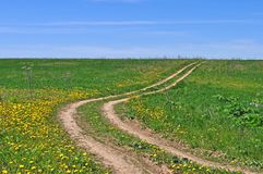 Country dirt road in the field Stock Image