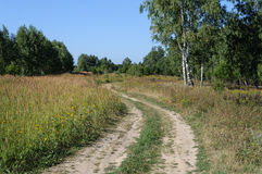 Country dirt road in forest glade Royalty Free Stock Photos