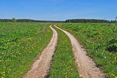 Country dirt road in the meadow Stock Photography