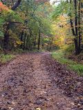 Country Road Littered with Leaves in Fall royalty free stock photography