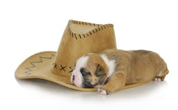 Country dog Royalty Free Stock Images