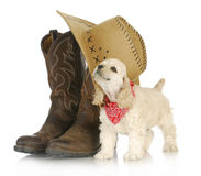 Country dog Stock Photos