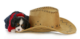 Country dog Royalty Free Stock Photography