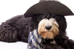 Country dog. Dog dressed as a true Texan cowboy Stock Images
