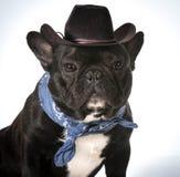 Country dog Stock Photos