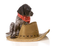 Country dog Stock Image