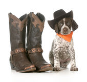 Country dog. German shorthaired pointer wearing western hat sitting beside western boots isolated on white background - 7 weeks old Stock Image