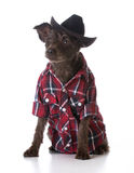 Country dog Stock Photo