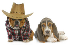Country dogs Stock Image