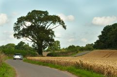 Country Drive Royalty Free Stock Photos