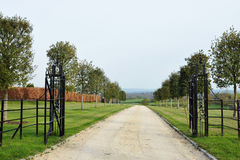 Country Driveway. Landscape View of a Country Driveway Lined by Maple Tree Saplings Royalty Free Stock Photography