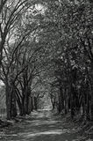 Country Fall Road in Black and White Royalty Free Stock Photo