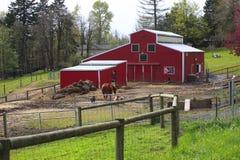 Country farm & animals. Stock Photo